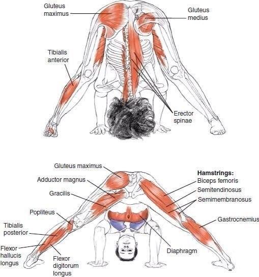 Упражнения для растяжки на всё тело