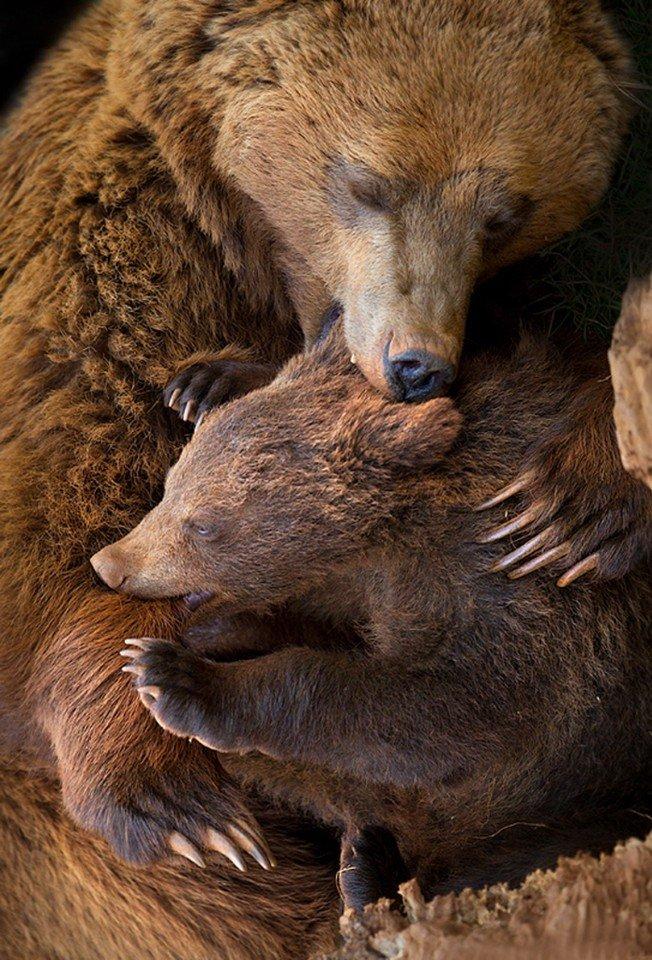 Объятия животных