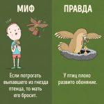 10 интересных фактов о животных, которые понравятся даже детям